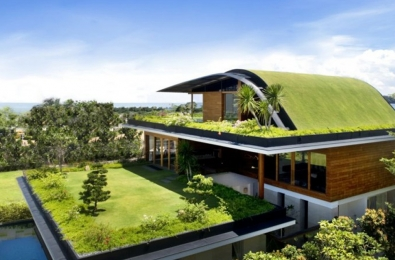 Green Facades and Roofs